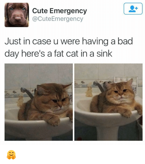 Bad Day, Memes, and Fat: Cute Emergency  @Cute Emergency  Just in case u were having a bad  day here's a fat cat in a sink 🤗