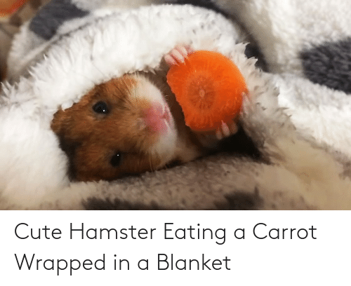 blanket: Cute Hamster Eating a Carrot Wrapped in a Blanket
