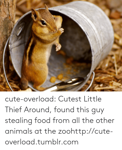 stealing food: cute-overload:  Cutest Little Thief Around, found this guy stealing food from all the other animals at the zoohttp://cute-overload.tumblr.com