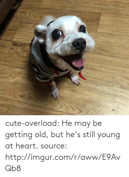 Young At Heart: cute-overload:  He may be getting old, but he's still young at heart. source: http://imgur.com/r/aww/E9AvQb8