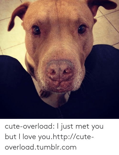 i just met you: cute-overload:  I just met you but I love you.http://cute-overload.tumblr.com