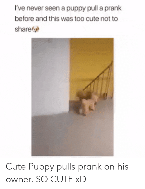 Puppy: Cute Puppy pulls prank on his owner. SO CUTE xD