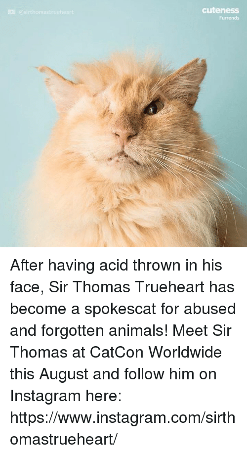 Animals, Instagram, and Memes: cuteness  Furrends  @sirthomastrueheart After having acid thrown in his face, Sir Thomas Trueheart has become a spokescat for abused and forgotten animals!  Meet Sir Thomas at CatCon Worldwide this August and follow him on Instagram here: https://www.instagram.com/sirthomastrueheart/
