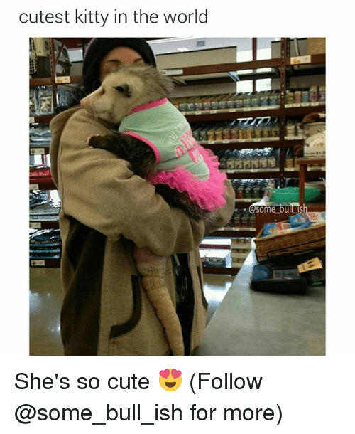 cuteness: cutest kitty in the world  Some bul  is She's so cute 😍 (Follow @some_bull_ish for more)