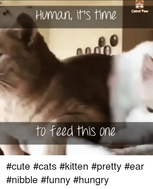 Funny Hungry: Cutest Paw  meQitat  to feed this one #cute #cats #kitten #pretty #ear #nibble #funny #hungry