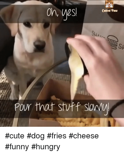 Cute, Funny, and Hungry: Cutest Paw  Sp  Pour that stvff sawi #cute #dog #fries #cheese #funny #hungry