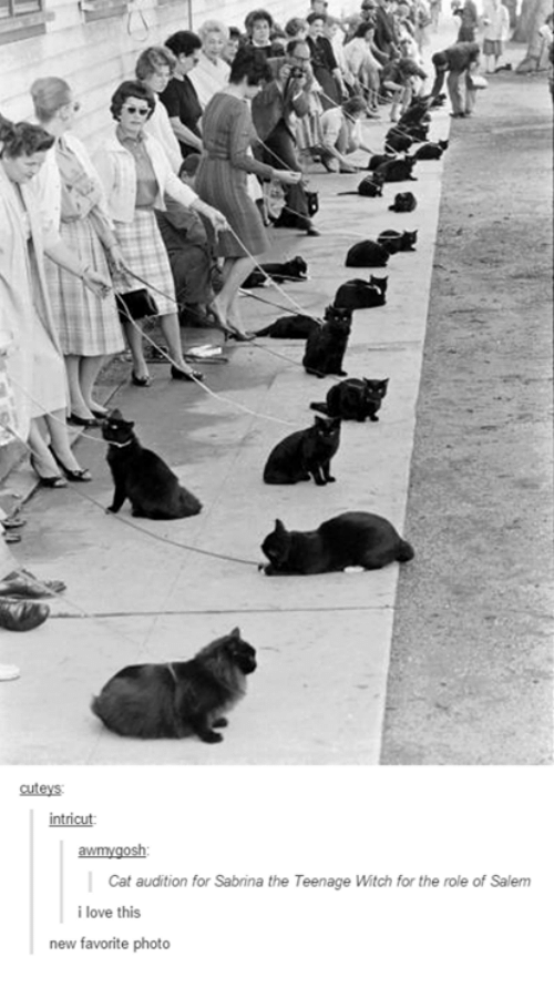 salem: cuteys  intricut  awmygosh  Cat audition for Sabrina the Teenage Witch for the role of Salem  i love this  new favorite photo