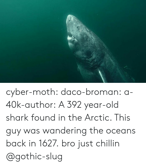 moth: cyber-moth:  daco-broman: a-40k-author:  A 392 year-old shark found in the Arctic. This guy was wandering the oceans back in 1627.  bro just chillin   @gothic-slug