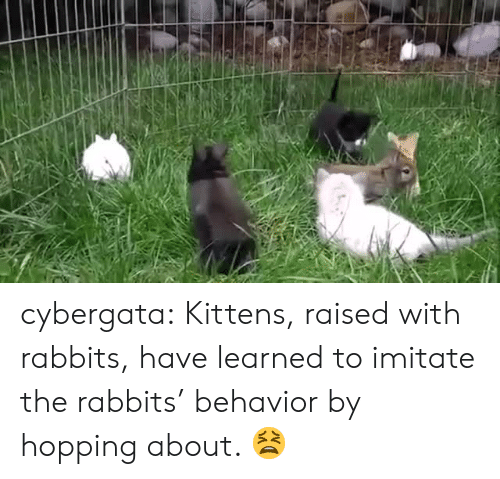imitate: cybergata:   Kittens, raised with rabbits, have learned to imitate the rabbits' behavior by hopping about.     😫
