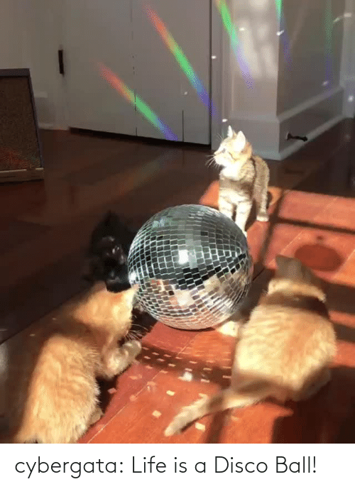 ball: cybergata: Life is a Disco Ball!