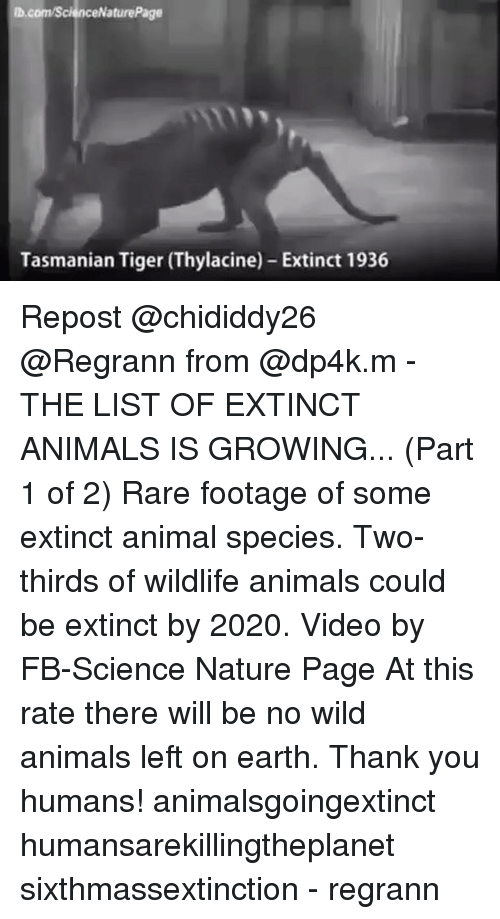 tasmanian tiger: D.com/Science NaturePage  Tasmanian Tiger (Thylacine) Extinct 1936 Repost @chididdy26 ・・・ @Regrann from @dp4k.m - THE LIST OF EXTINCT ANIMALS IS GROWING... (Part 1 of 2) Rare footage of some extinct animal species. Two-thirds of wildlife animals could be extinct by 2020. Video by FB-Science Nature Page At this rate there will be no wild animals left on earth. Thank you humans! animalsgoingextinct humansarekillingtheplanet sixthmassextinction - regrann