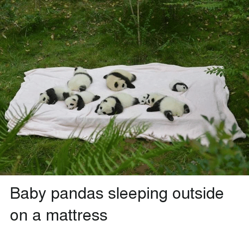 Baby, It's Cold Outside: D3x  셀 Baby pandas sleeping outside on a mattress