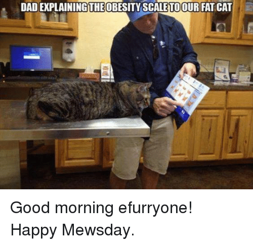 Good Morning Daddy Meme : Dad explainingtheobesity scaletoour fat cat good morning