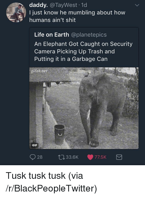 Gifak: daddy. @TayWest -1d  I just know he mumbling about how  humans ain't shit  Life on Earth @planetepics  An Elephant Got Caught on Security  Camera Picking Up Trash and  Putting it in a Garbage Can  gifak net  GIF  28 t033.6K 77.5K <p>Tusk tusk tusk (via /r/BlackPeopleTwitter)</p>