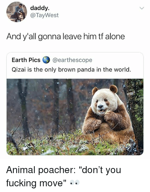 "Being Alone, Fucking, and Panda: daddy.  @TayWest  And y'all gonna leave him tf alone  Earth Pics @earthescope  Qizai is the only brown panda in the world. Animal poacher: ""don't you fucking move"" 👀"