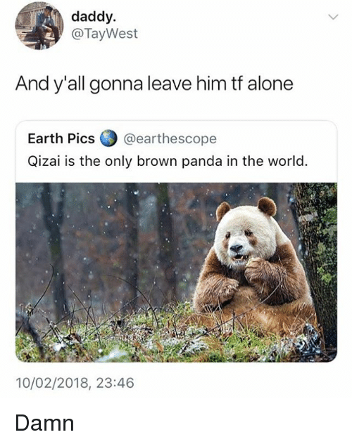 Being Alone, Memes, and Panda: daddy.  @TayWest  And y'all gonna leave him tf alone  Earth Pics (..) @earthescope  Qizai is the only brown panda in the world.  10/02/2018, 23:46 Damn