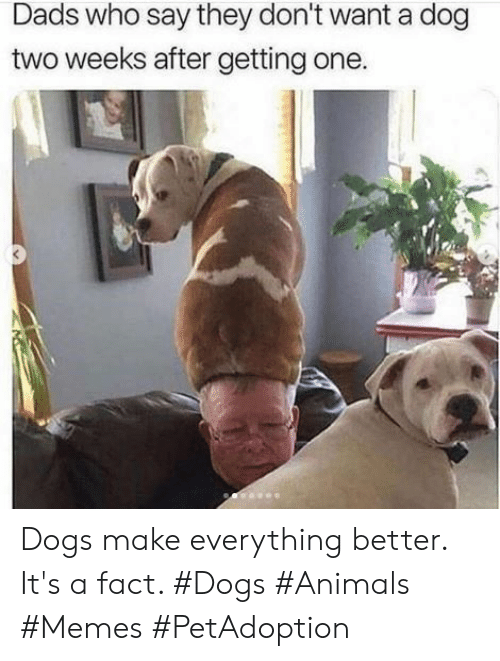 Animals Memes: Dads who say they don't want a dog  two weeks after getting one. Dogs make everything better. It's a fact. #Dogs #Animals #Memes #PetAdoption