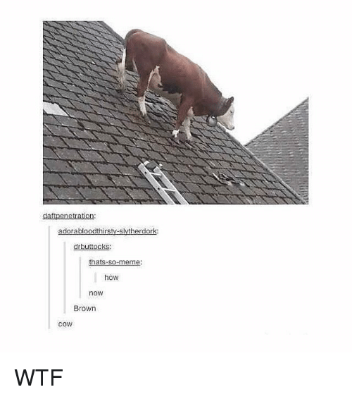 Meme, Memes, and Wtf: daftpenetration  drbuttocks:  thats-so-meme  how  now  Brown  coW WTF