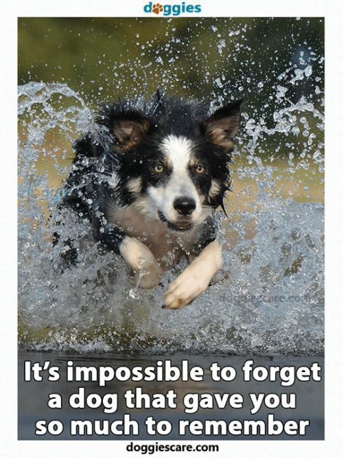 Memes, Impossibility, and 🤖: daggies  It's impossible to forget  a dog that gave you  so much to remember  doggies care.com