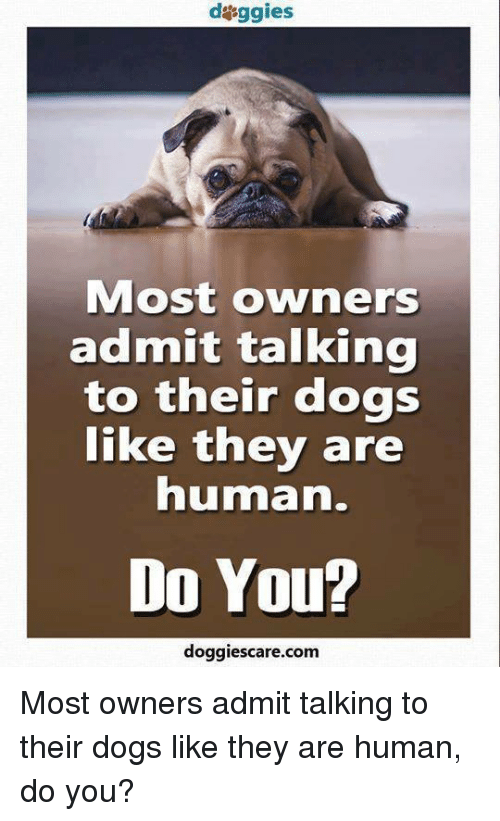 Dogs, Memes, and 🤖: daggies  Most owners  admit talking  to their dogs  like they are  human.  Do You?  doggies care.com Most owners admit talking to their dogs like they are human, do you?
