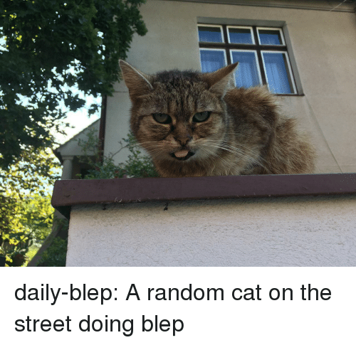 Tumblr, Blog, and Cat: daily-blep:  A random cat on the street doing blep