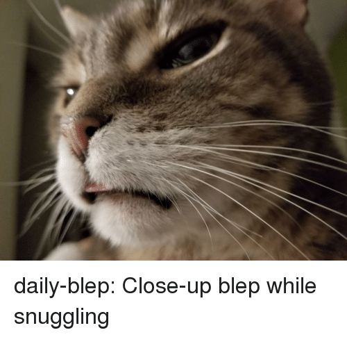 Blep: daily-blep:  Close-up blep while snuggling