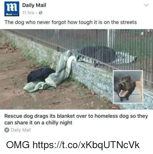 rescue dog: Daily Mail  11 hrs  mailOnline  The dog who never forgot how tough it is on the streets  Rescue dog drags its blanket over to homeless dog so they  can share it on a chilly night  Daily Mail OMG https://t.co/xKbqUTNcVk