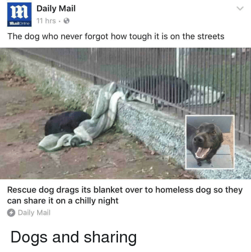 rescue dog: Daily Mail  11 hrs  MailOnline  The dog who never forgot how tough it is on the streets  Rescue dog drags its blanket over to homeless dog so they  can share it on a chilly night  Daily Mail <p>Dogs and sharing</p>
