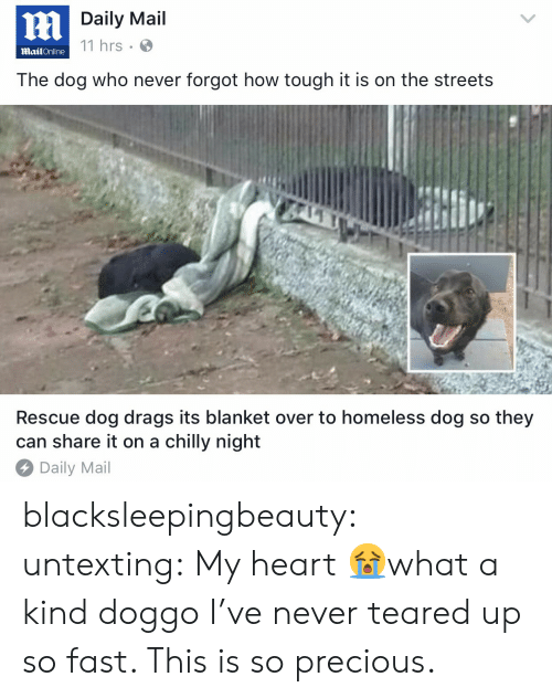 rescue dog: Daily Mail  11 hrs  MailOnline  The dog who never forgot how tough it is on the streets  Rescue dog drags its blanket over to homeless dog so they  can share it on a chilly night  Daily Mail blacksleepingbeauty: untexting: My heart 😭what a kind doggo I've never teared up so fast. This is so precious.