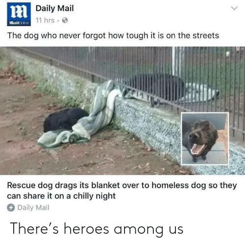 rescue dog: Daily Mail  11 hrs  mailOnline  The dog who never forgot how tough it is on the streets  Rescue dog drags its blanket over to homeless dog so they  can share it on a chilly night  Daily Mail There's heroes among us