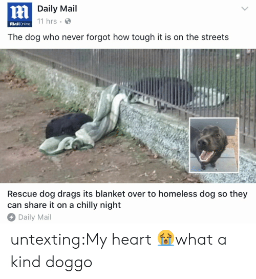 rescue dog: Daily Mail  11 hrs  MailOnline  The dog who never forgot how tough it is on the streets  Rescue dog drags its blanket over to homeless dog so they  can share it on a chilly night  Daily Mail untexting:My heart 😭what a kind doggo