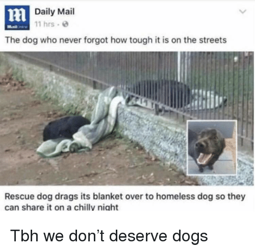 rescue dog: Daily Mail  11 hrs  The dog who never forgot how tough it is on the streets  Rescue dog drags its blanket over to homeless dog so they  can share it on a chillv niaht Tbh we don't deserve dogs
