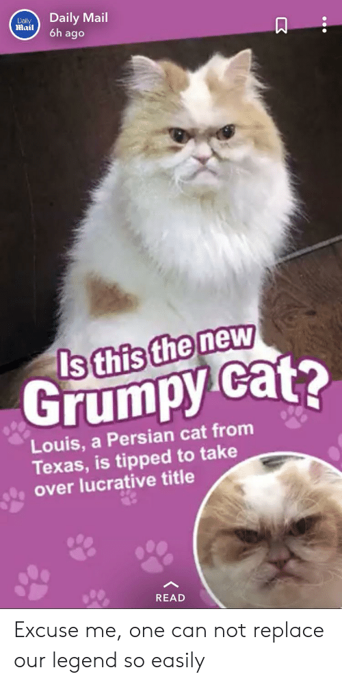 persian cat: Daily Mail  6h ago  Daly  Mail  Is this the new  Grumpy cat?  Louis, a Persian cat from  Texas, is tipped to take  over lucrative title  READ Excuse me, one can not replace our legend so easily