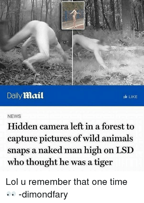news article hidden camera left forest capture pictures wild animals snaps naked high thought tiger