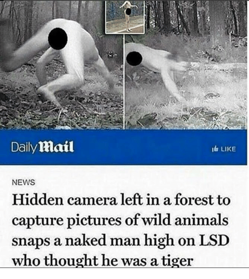 Animals, News, and Camera: Daily Mail  i& LIKE  NEWS  Hidden camera left in a forest to  capture pictures of wild animals  snaps a naked man high on LSD  who thought he was a tiger