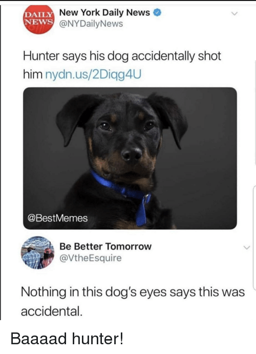 Accidental: DAILY  NEWS  New York Daily News  @NYDailyNews  Hunter says his dog accidentally shot  him nydn.us/2Diagg4UU  @BestMemes  Be Better Tomorrow  @VtheEsquire  Nothing in this dog's eyes says this was  accidental. Baaaad hunter!