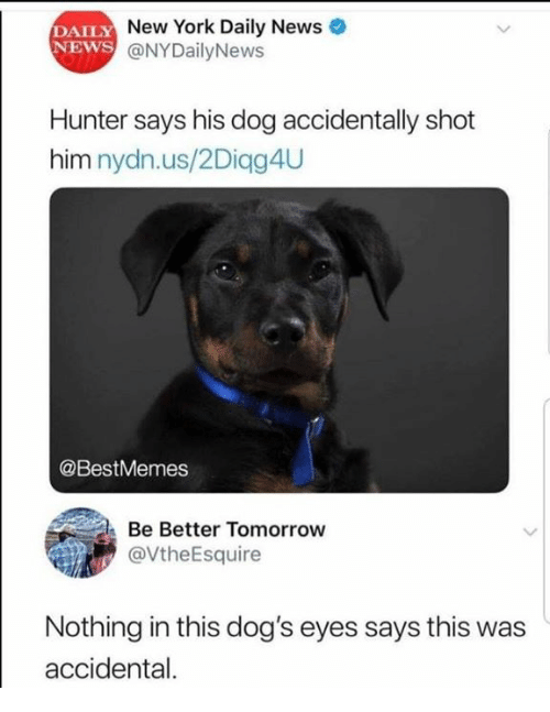 Accidental: DAILY  NEWS  New York Daily News  @NYDailyNews  Hunter says his dog accidentally shot  him nydn.us/2Diqg4U  @BestMemes  Be Better Tomorrow  @VtheEsquire  Nothing in this dog's eyes says this was  accidental