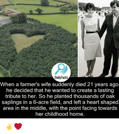 Memes, 🤖, and Oak: DailyFacts  When a farmer's wife suddenly died 21 years ago  he decided that he wanted to create a lasting  tribute to her. So he planted thousands of oak  saplings in a 6-acre field, and left a heart shaped  area in the middle, with the point facing towards  her childhood home. ✌️❤️