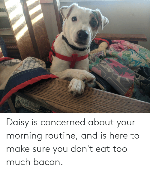 Too Much, Bacon, and Daisy: Daisy is concerned about your morning routine, and is here to make sure you don't eat too much bacon.