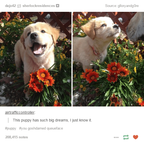 Puppies, Puppy, and Humans of Tumblr: dajo42 sherlockresidences  airtrafficController:  This puppy has such big dreams, l just know it  #puppy #you goshdarned queueface  208,415 notes  Source  gloryandgore