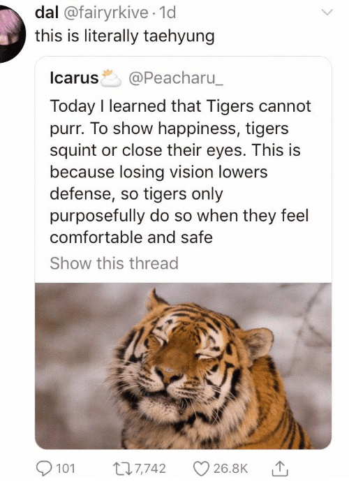 lowers: dal @fairyrkive 1d  this is literally taehyung  Icarus @Peacharu  Today I learned that Tigers cannot  purr. To show happiness, tigers  squint or close their eyes. This is  because losing vision lowers  defense, so tigers only  purposefully do so when they feel  comfortable and safe  Show this thread  101 7742 26.8K