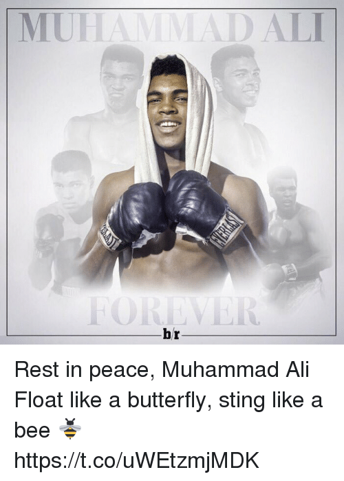 sting like a bee: DALI  br Rest in peace, Muhammad Ali  Float like a butterfly, sting like a bee 🐝 https://t.co/uWEtzmjMDK