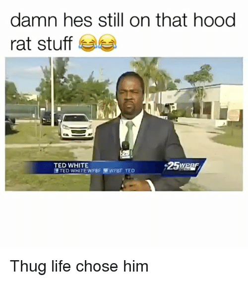 Life, Memes, and Ted: damn hes still on that hood  rat stuff  TED WHITE  25We Thug life chose him