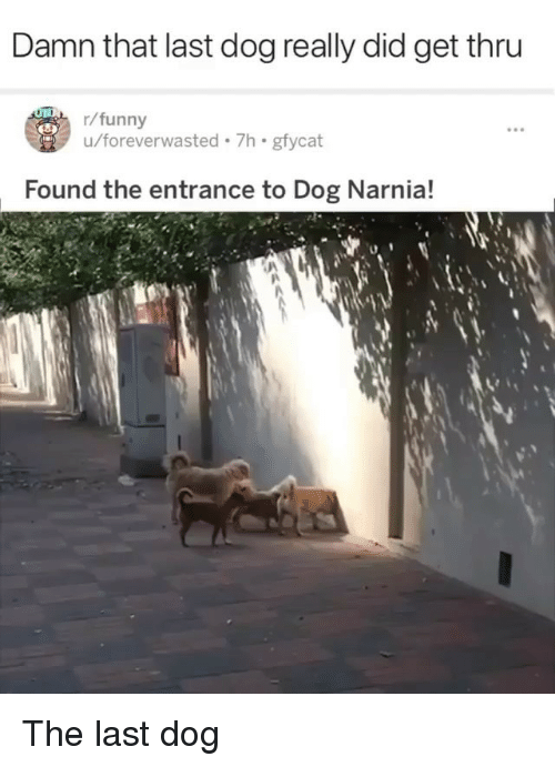 narnia: Damn that last dog really did get thru  r/funny  u/foreverwasted 7h gfycat  Found the entrance to Dog Narnia! The last dog