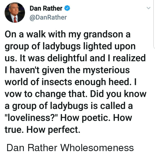 """lighted: Dan Rather  @DanRather  On a walk with my grandson a  group of ladybugs lighted upon  us. It was delightful and I realized  I haven't given the mysteriou:s  world of insects enough heed. I  vow to change that. Did you know  a group of ladybugs is called a  loveliness?"""" How poetic. Hovw  true. How perfect. Dan Rather Wholesomeness"""