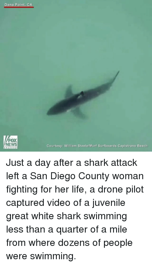 Drone, Juvenile, and Life: Dana Point, CA  FOX  NEWS  Courtesy: William SteelelMurf Surfboards Capistrano Beach Just a day after a shark attack left a San Diego County woman fighting for her life, a drone pilot captured video of a juvenile great white shark swimming less than a quarter of a mile from where dozens of people were swimming.