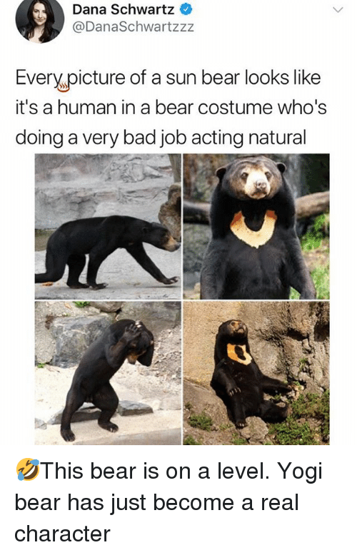 Bad, Memes, and Bear: Dana Schwartz  @DanaSchwartzzz  Every picture of a sun bear looks like  it's a human in a bear costume who's  doing a very bad job acting natural 🤣This bear is on a level. Yogi bear has just become a real character