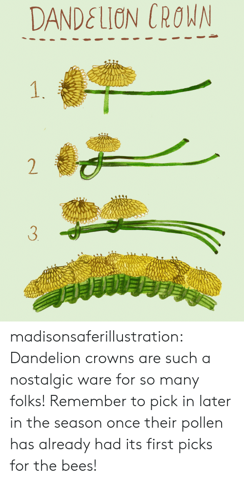 crown: DANDELION CROWN  1.  2  3 madisonsaferillustration: Dandelion crowns are such a nostalgic ware for so many folks! Remember to pick in later in the season once their pollen has already had its first picks for the bees!
