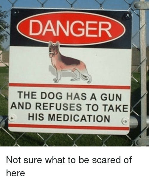 Memes, Scare, and 🤖: DANGER  THE DOG HAS A GUN  AND REFUSES TO TAKE  HIS MEDICATION Not sure what to be scared of here