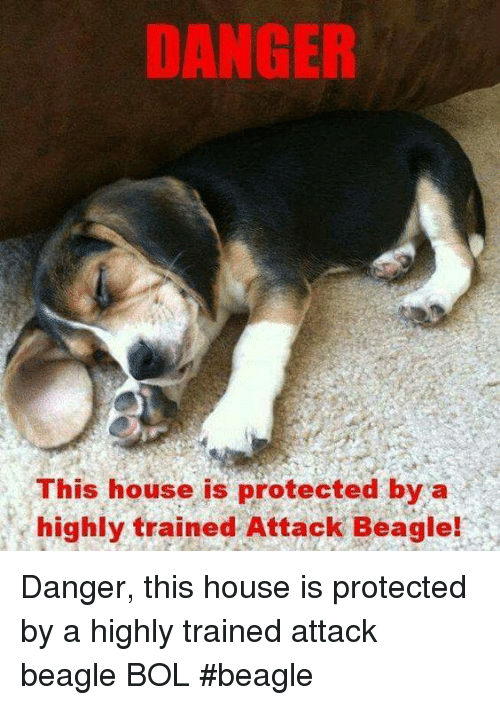 Memes, House, and 🤖: DANGER  This house is protected by a  highly trained Attack Beagle! Danger, this house is protected by a highly trained attack beagle  BOL    #beagle